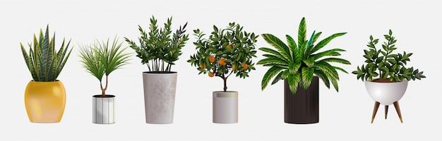 Набор реалистичных детальных комнатных или офисных растений для дизайна интерьера и декора. тропические и средиземноморские растения для внутреннего декора дома или офиса