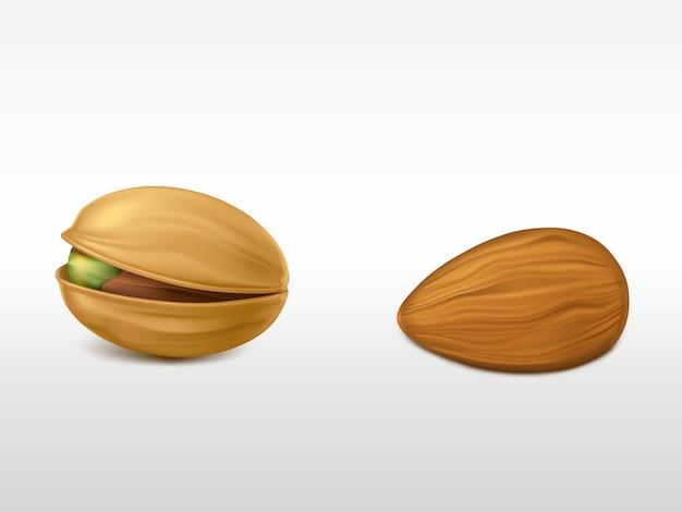 白い背景に分離された現実的な非常に詳細なナッツのセットです。