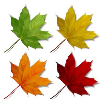 白い背景の上の現実的なカエデの葉のセットです。 eps10イラスト
