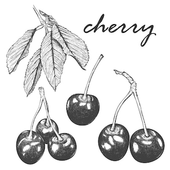 さくらんぼと葉のリアルなスケッチのセット