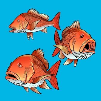 Gamefish 번들 컬렉션을 위한 붉은 도미 물고기 세트