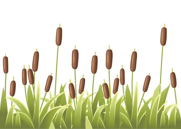 緑の草の葦のセット葦植物緑の沼の杖草の図