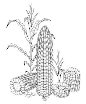 熟したトウモロコシの手描きイラストのセット