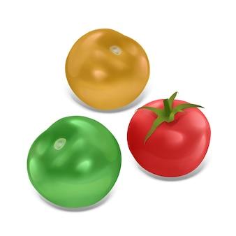 고립 된 익은 토마토 세트, 현실적인 스타일, 그림에서 빨강, 녹색 및 노란색 색상의 토마토 세트