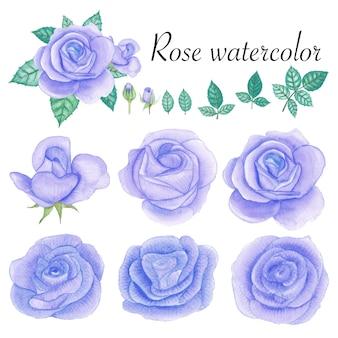 バラの水彩要素のセットです。