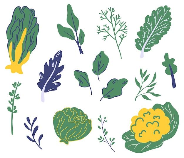 샐러드 채소 세트입니다. 다양한 종류의 샐러드. 양상추, 물냉이, 케일, 시금치. 녹색 양상추 샐러드 야채 잎. 건강한 제품. 채식주의자. 장식, 주방, 메뉴, 레스토랑. 벡터