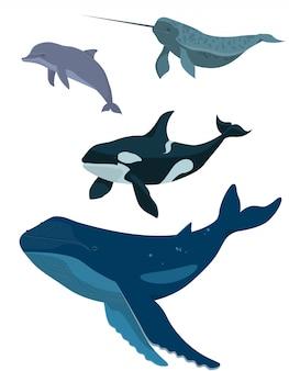 바다 동물의 집합입니다. 흰색 배경에 고립 된 만화 스타일에서 고래, 돌고래, 일각 고래 및 범 고래.