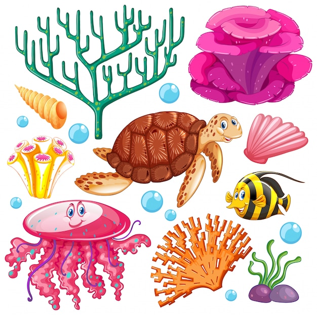 海の生き物のセット