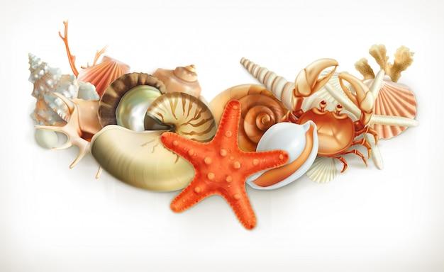 貝殻、イラストのセット