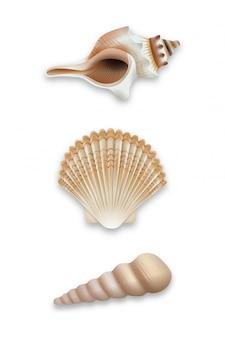 貝殻のセット