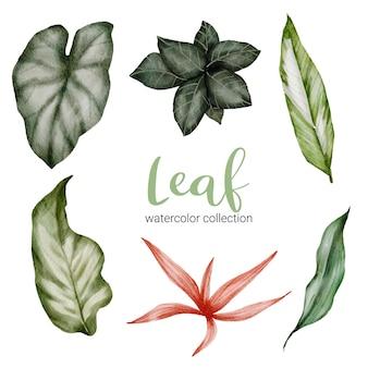 분리된 부품 세트 및 수채화 스타일의 아름다운 식물 잎으로 모으기, 수채화 그림
