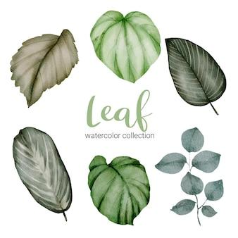 Набор отдельных частей и собрать красивый лист растений в стиле акварели, акварельная иллюстрация