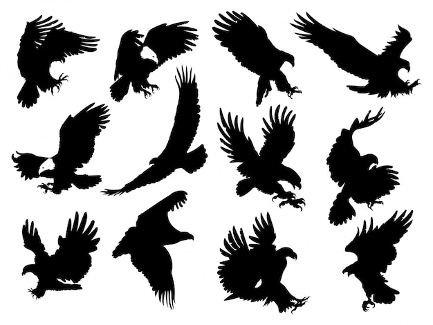 Набор силуэт орлов. иллюстрация хищных птиц
