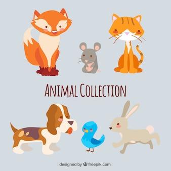6愛らしい動物のセット
