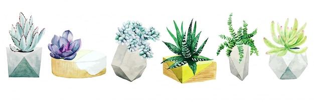 6 화분 선인장 식물과 다육 식물, 손으로 그린 세트