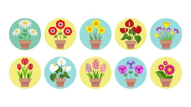 鉢植えの春の庭の花のセットです。