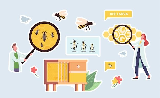 ステッカー養蜂場、生物学科学のテーマのセット。巨大な虫眼鏡を持った科学者のキャラクター、蜂の巣の蜂、蜂の巣とドローンの労働者に囲まれた女王。漫画のベクトル図