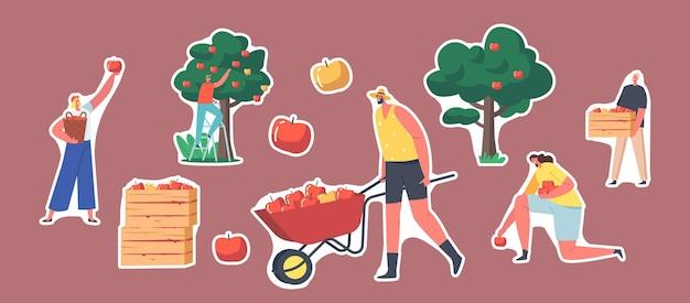 정원에서 사과를 수확하는 스티커 정원사 캐릭터 세트입니다. 수레를 든 남자, 사과 작물이 든 나무 상자, 잘 익은 신선한 과일이 있는 나무. 만화 사람들 벡터 일러스트 레이 션, 고립 된 패치