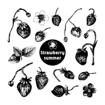 イチゴのセットは、手描きのスタイルでスケッチします。ベクトルイラスト、白い背景の上の夏の落書き。季節のメニュー、デザートのデザイン、料理の本のための新鮮なベリー。
