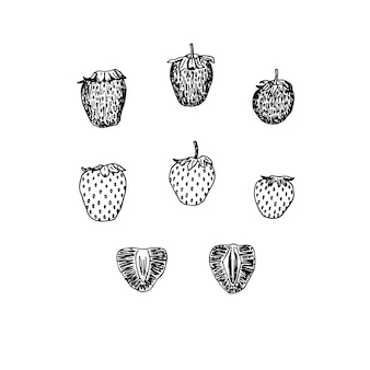 イチゴのセット、全体とカット、ベクトルイラスト、手描き