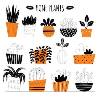 냄비에 10 개의 양식에 일치시키는 실내 식물 세트