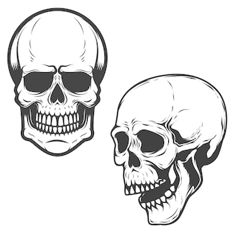 흰색 배경 요소에 두개골의 집합입니다.