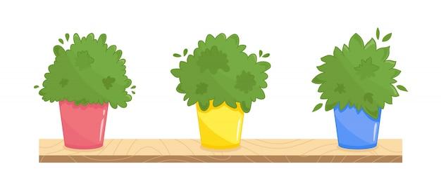 異なる色の鍋で3つの社内植物のセット。都市の台所の窓辺の庭のイラスト。緑豊かな料理用ハーブコレクション。白の上