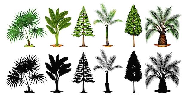 木と影のセット
