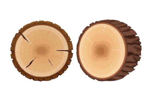 Набор пней в поперечном сечении дерева текстурированные, подробно изолированные на белом