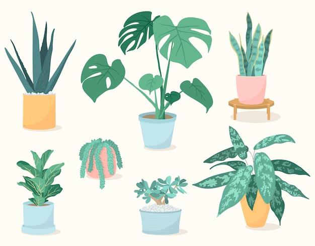 냄비, 알로에 베라, 바이올린 잎 무화과, 뱀 식물, 몬스테라, 부로스 꼬리, 아글라오네마, 옥 식물에 있는 트렌디한 집 식물 세트. 다육 식물과 잎이 많은 식물.