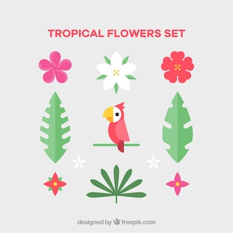 Set of tropical flowers and bird in flat style
