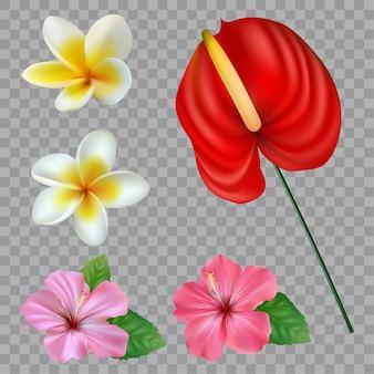 熱帯の花のコレクションのセット。白い背景の上のベクトル分離要素