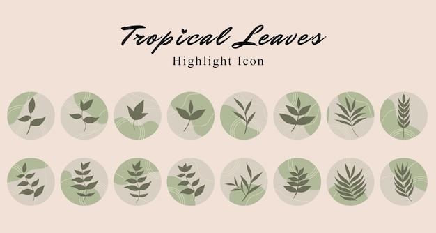 Набор тропических листьев ботанического значка в социальных сетях выделите шаблон истории на зеленом фоне