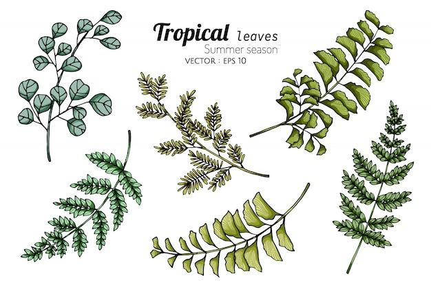 熱帯の葉のデッサンイラストのセット Premiumベクター