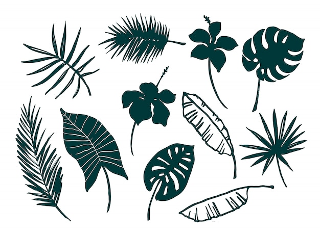 Набор тропических листьев и цветов.