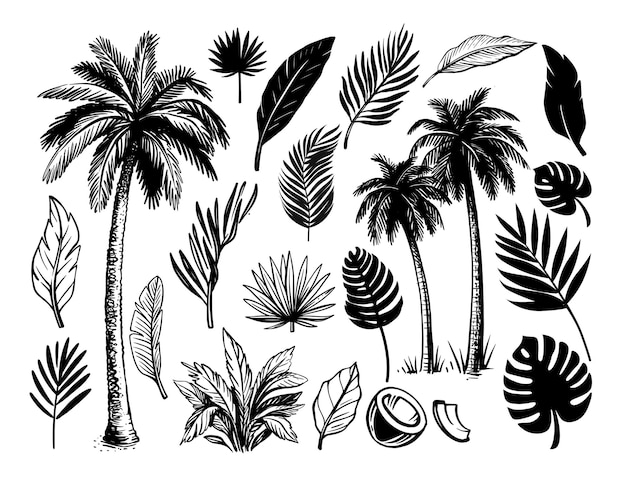 Набор тропических листьев и пальм.