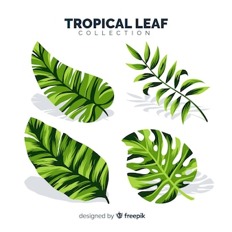 Set of tropical leaves with flat design