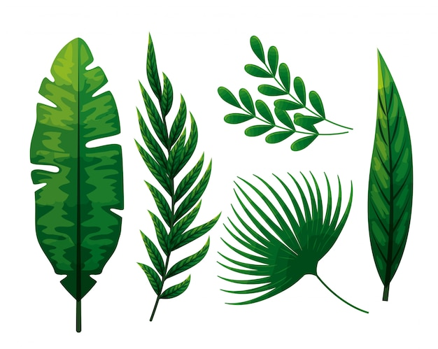 熱帯の葉のセット