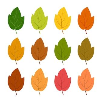 Набор из двенадцати осенних листьев разных осенних цветов. векторная иллюстрация.