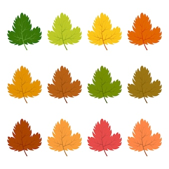 다른 가을 색으로 12개의 단풍 세트. 벡터 일러스트 레이 션.