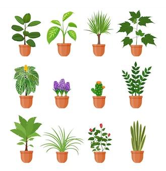 フラットスタイルの鍋に花を持つ12の観葉植物のセット。分離された棚の上の屋内gerb。