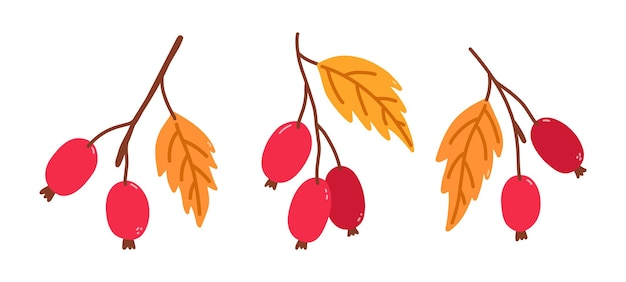 Набор веток с шиповником и золотыми листьями
