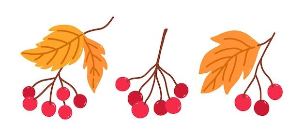 Набор веток с ягодами калины и желтыми листьями