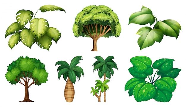 다양 한 식물과 나무 세트