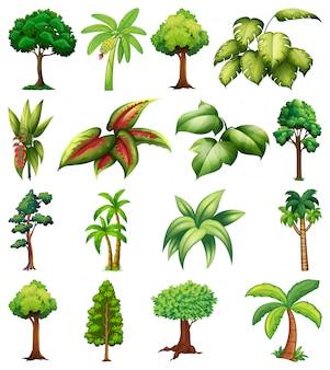 Набор различных растений и деревьев