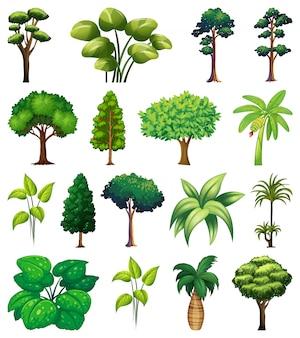 다양한 식물과 나무 세트