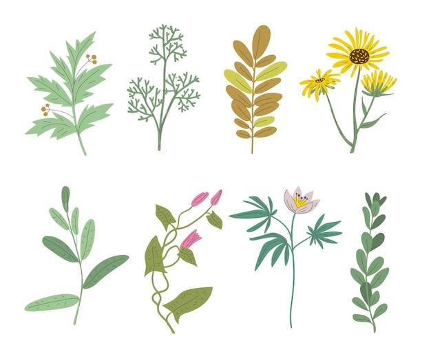 様々な手描きの花のセット