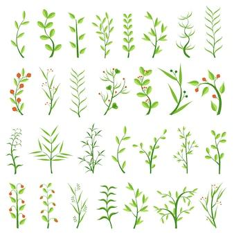 다양한 허브 세트. 치유 허브. 딸기와 관목. 잡초. 조류. 식물을 등반. 외딴