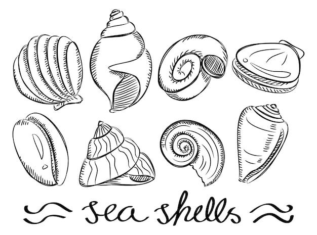 낙서 스타일의 다양 한 바다 조개 세트