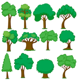 Set of various trees